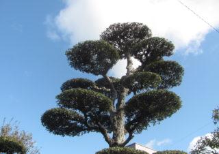 樹木の管理